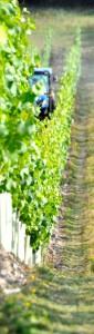 Greyfriars Wineyard Openday @ United Kingdom