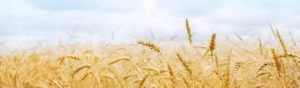 11am Harvest Services at Puttenham and Seale